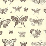 Papillon 4070-15 Ivory Stone Butterfly Etchings by Moda